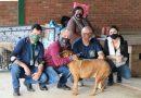 15 cães foram  adotados na Feira de Adoção da Secretaria de Meio Ambiente